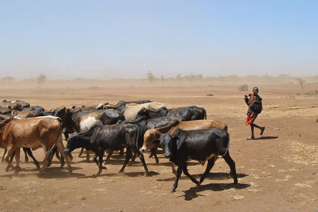 Animal Herders of Somalia
