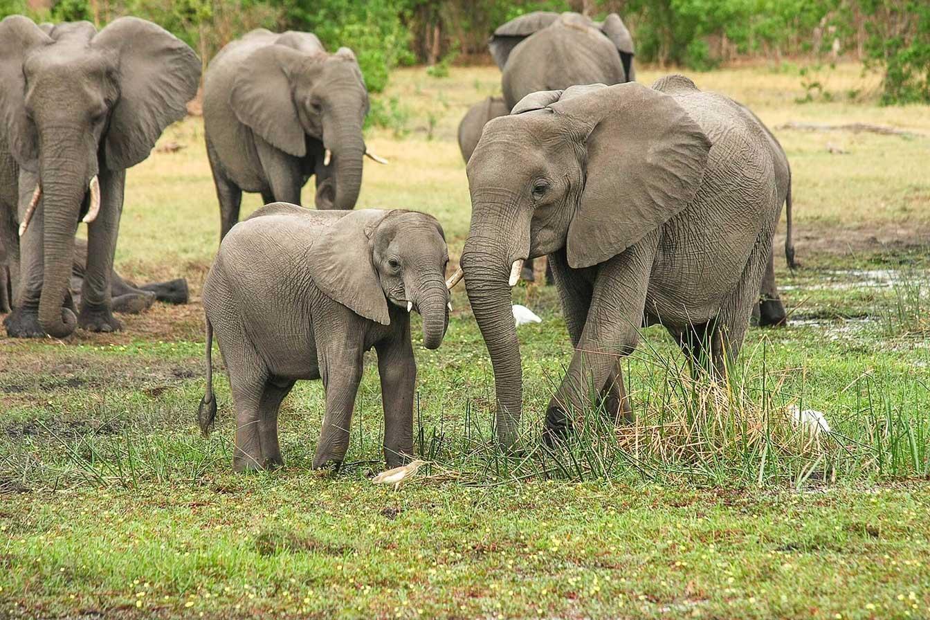 8 Interesting Facts About Botswana